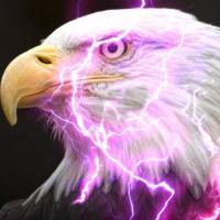 LightningEagle14's Photo